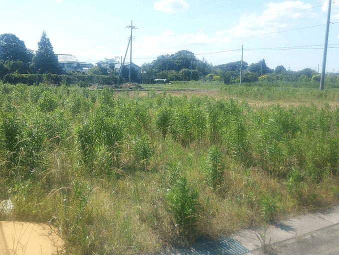 千葉県茂原市新築戸建て施工状況|2017年7月5日|04