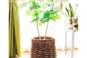 「観葉植物でつくるオシャレで爽やかなインテリア」