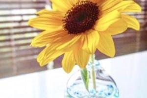 お花と花瓶の選び方でインテリアをもっとオシャレに