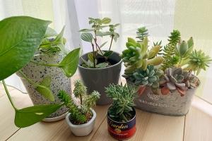 観葉植物と建築プラン
