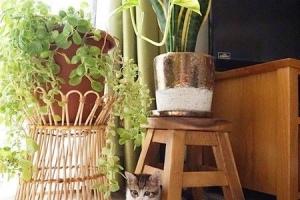 猫と人との心地よい暮らし